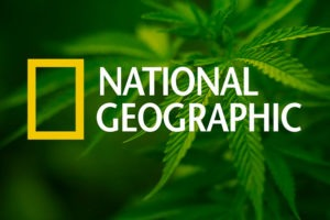 Drugs Inc with National Geographic cover my 420 Tours