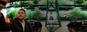Discover a weed grow house