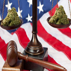 patenting cannabis federally