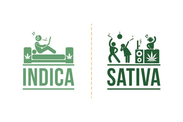 Indica vs Sativa vs Hybrid: What's the Difference? Cannabasics