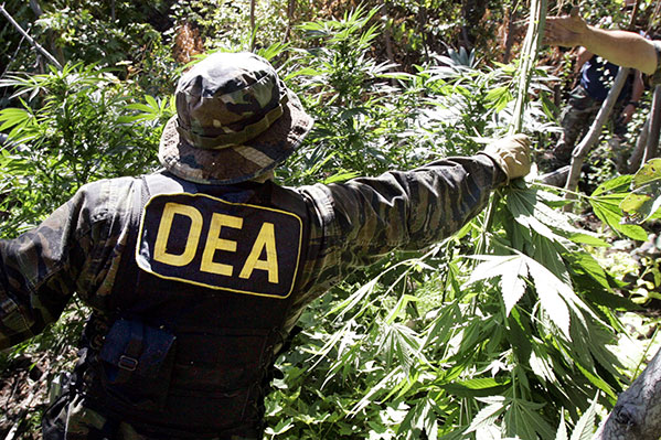 DEA May Finally Admit Cannabis is Not Like Heroine