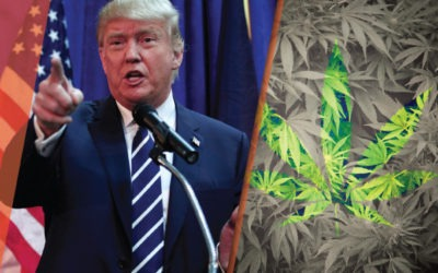 Donald Trump on the Issues? What's in Store for Cannabis Now?