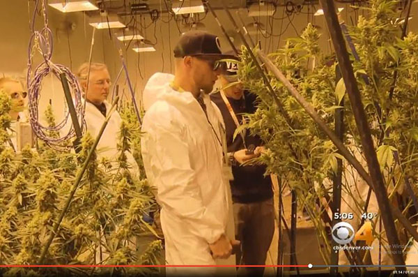 News 4 Denver cannabis