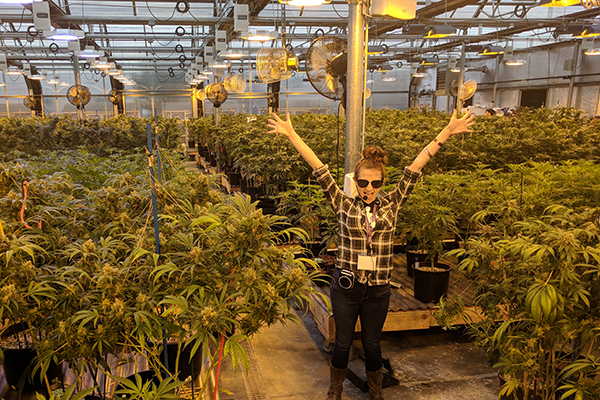 Denver pot tours - greenhouse grow