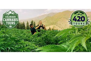 cannabis farm tour