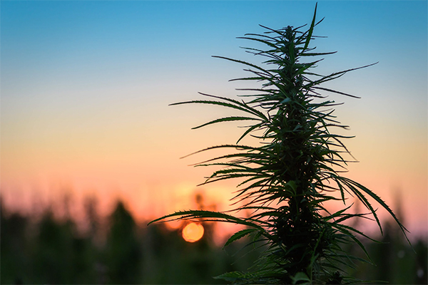 The Best Places To Grow Marijuana Outdoors