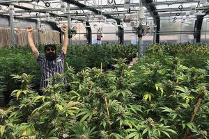 greenhouse grow and dispensary tour