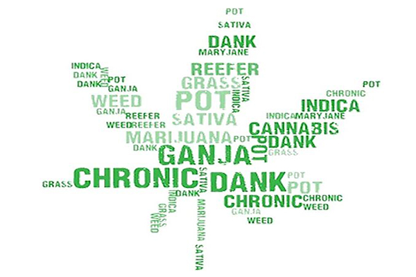 Slang for Weed: A Modern Terminology Guide