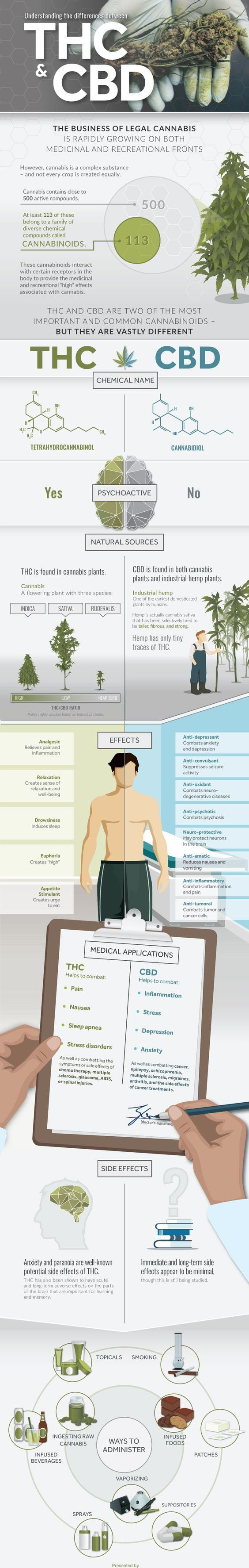 thc vs cbd infographic
