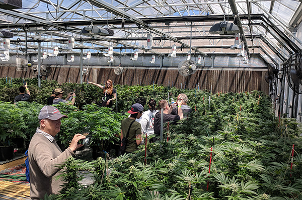 8 Reasons to Book a Cannabis Tour Today