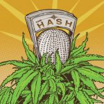 cannabis podcasts - the hash